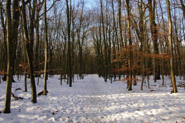 33-01.-Januar-2011-DSC_9232