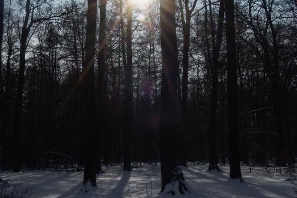 54 23. Januar 2013-_DSF2046