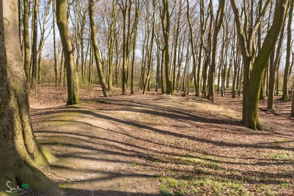Park - Blickrichtung zur Wildeshauser Straße
